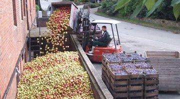 Lütauer Mosterei bei der Apfelsiloschütte