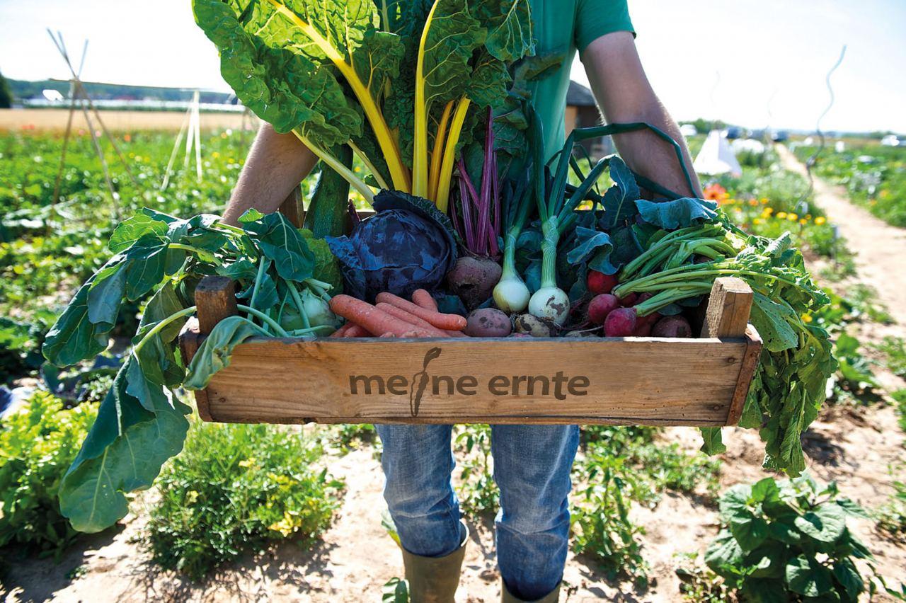 meine ernte Kiste voller Gemüse